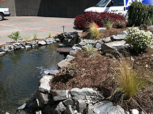 Garden-Pond-Lakewood