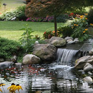 Landscaping-Plants-for-Lakewood-wa